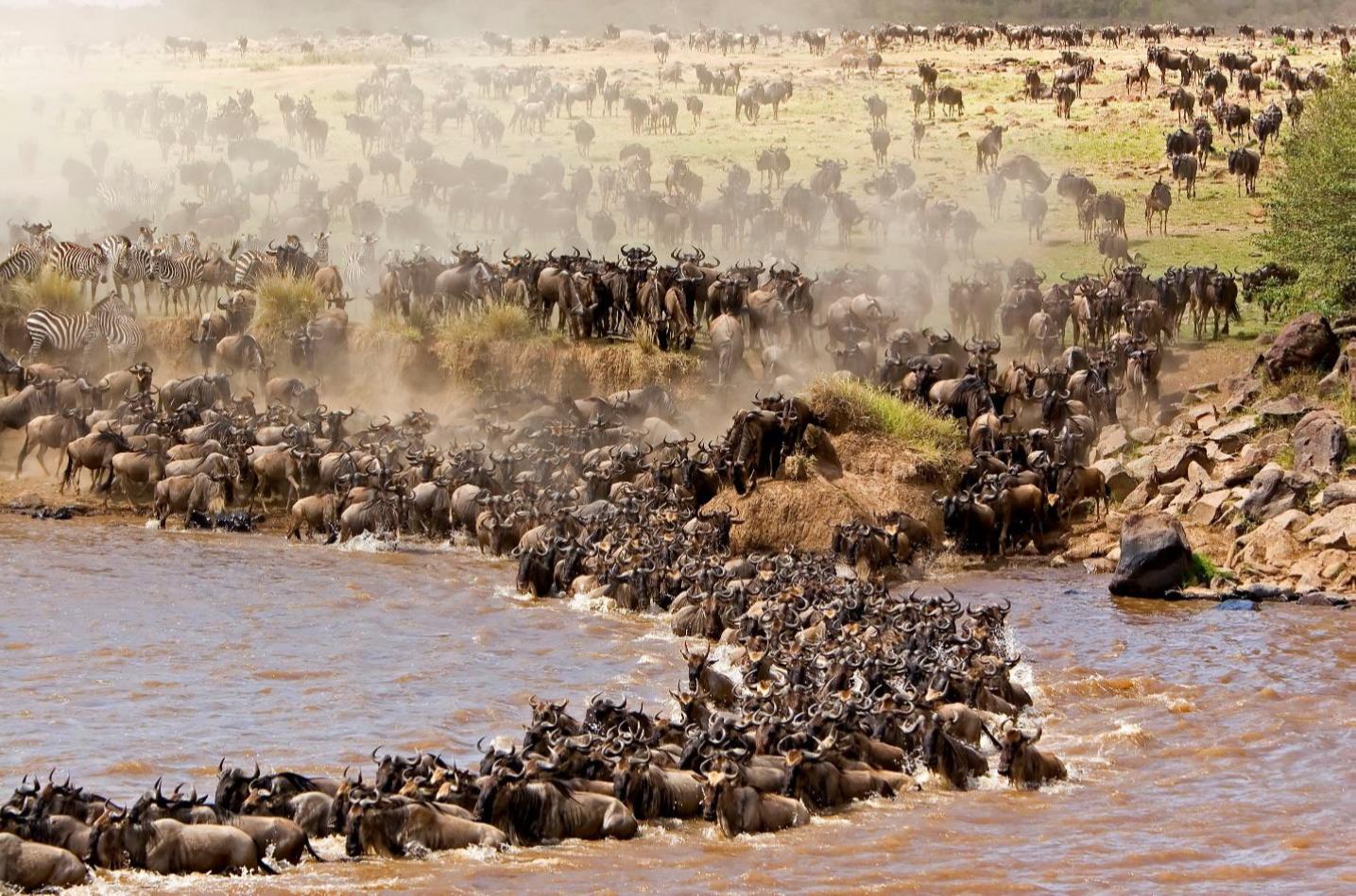 NO – Masai Mara 1