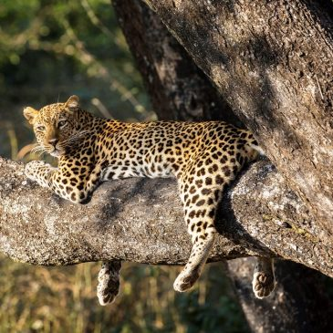 3 Day Best Value South Luangwa National Park$ 320.00
