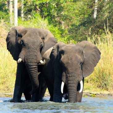 10 Day Southern Malawi tour  $ 1695.00