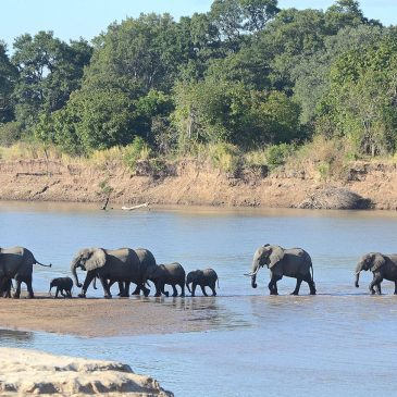 13 Day Full Zambia – Zambezi – Expedition Tour$ 2250.00