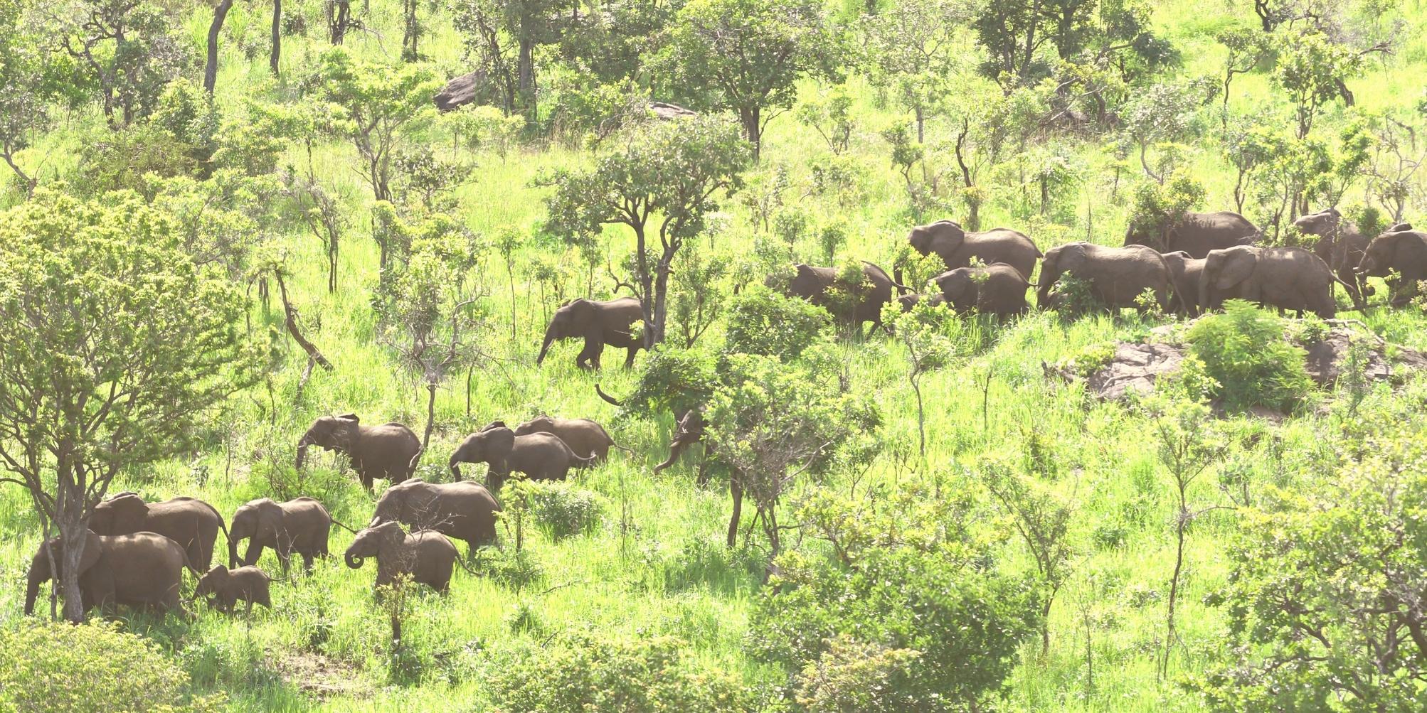 Earth Safari – Wildlife Action Group WAG Malawi 19