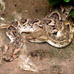Earth Safari Gambia Reptile Farm Kartong 2