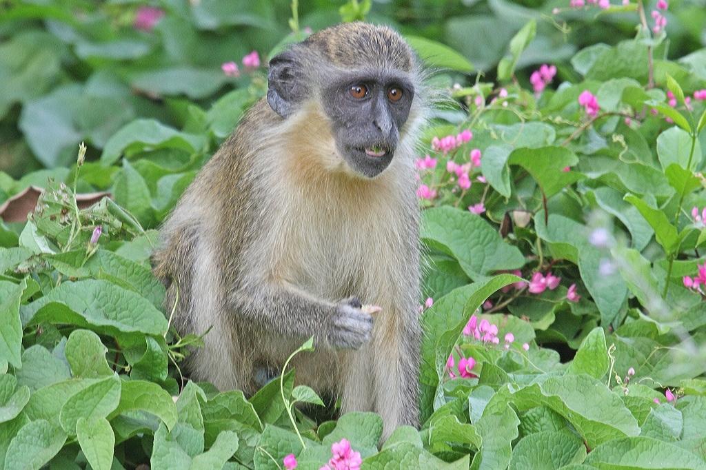 Earth Safari Gambia Abuko Nature Reserve
