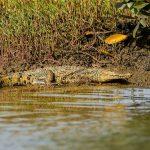 Earth Safari Gambia Kiang West Bao Bolong Tendaba Crocodile
