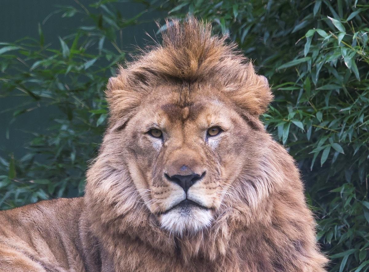 Earth Safari – Stichting Leeuw – Omar – Background