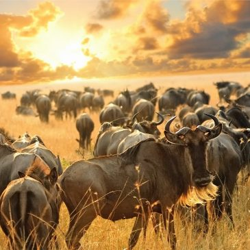6 Day Tsavo, Amboseli, Lake Nakuru and Maasai Mara€ 1000.00