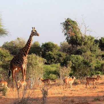 3 Day Tsavo East and WestFrom: € 370.00