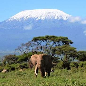 4 Day Tsavo East, West and AmboseliFrom: € 430.00