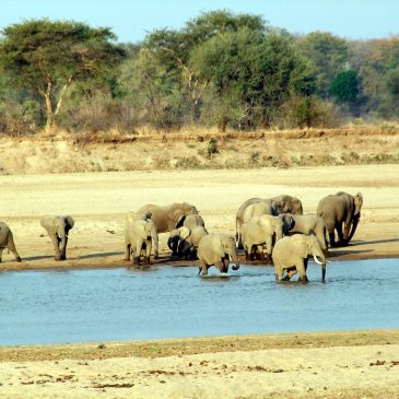 5 Day Best Value South Luangwa National Park$ 565.00