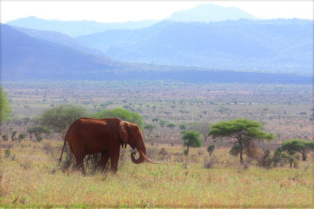 tsavo-elephant-landscape
